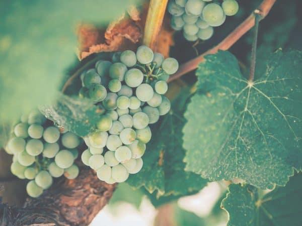 Vinimport